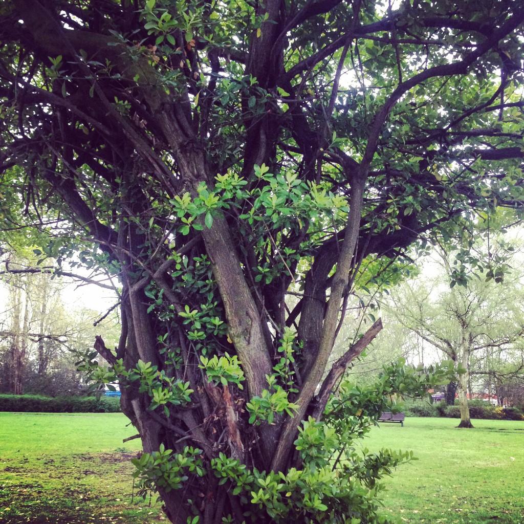 Tree in Hull