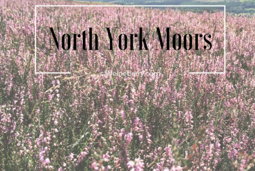 heather, hiking, north york moors, yorkshire, england