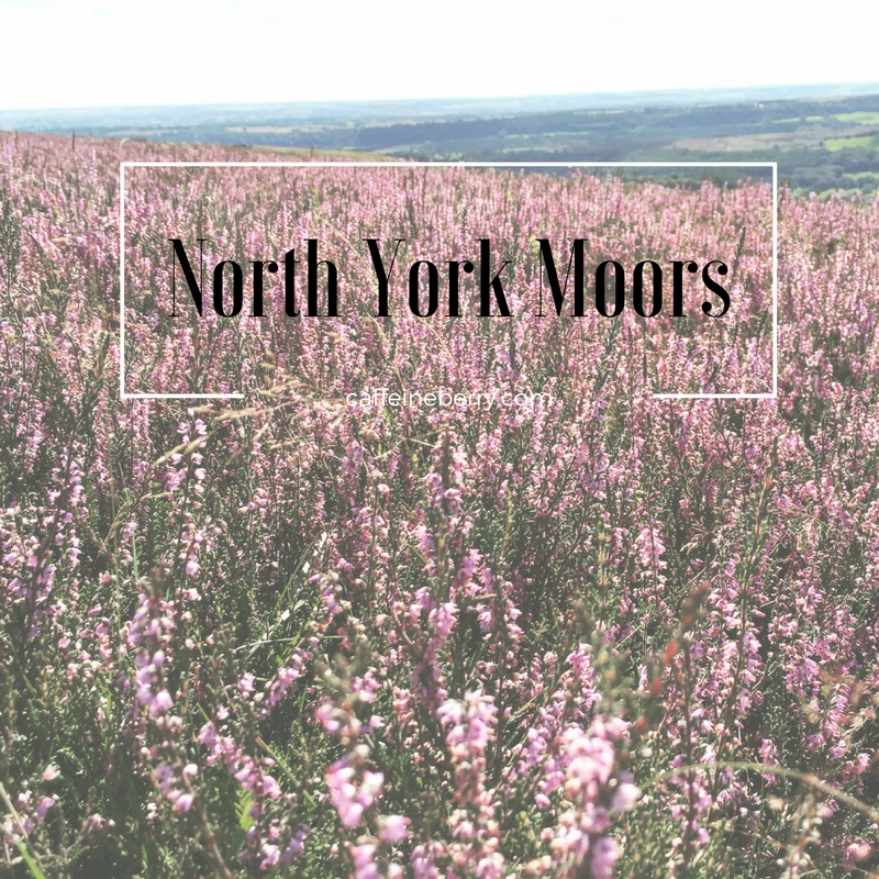 heather, hiking, north york moors, yorkshire, england