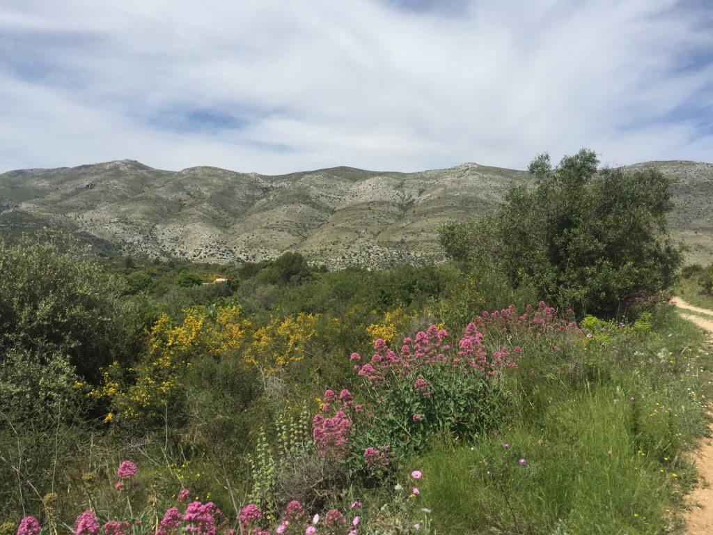 Beautiful Alicante scenery