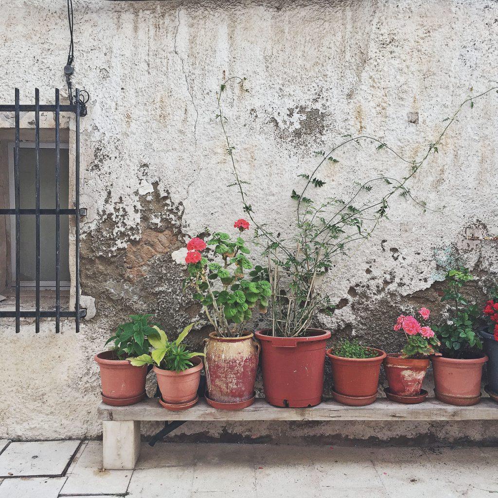 picturesque plants, alicante