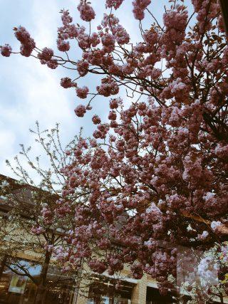 May Blossoms